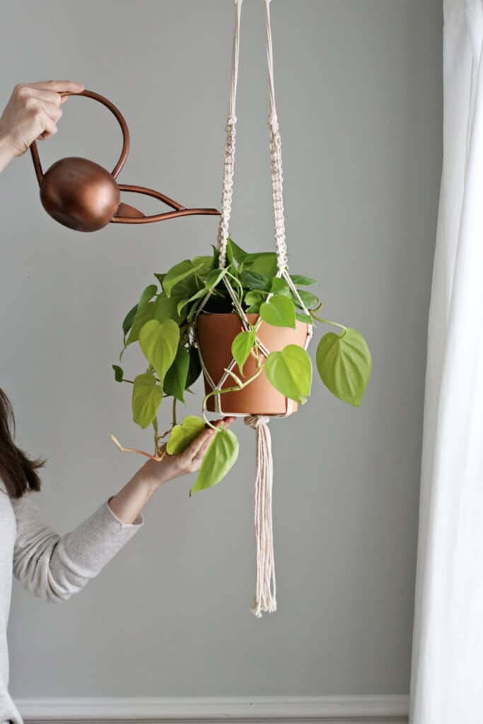 Macrame Plant Hanger
