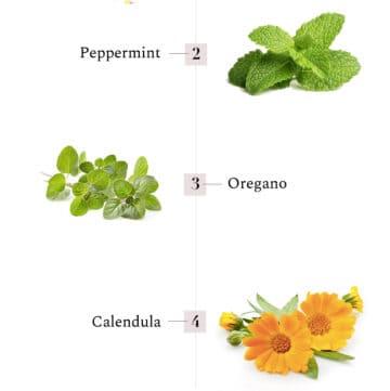 5 Healing Herbs