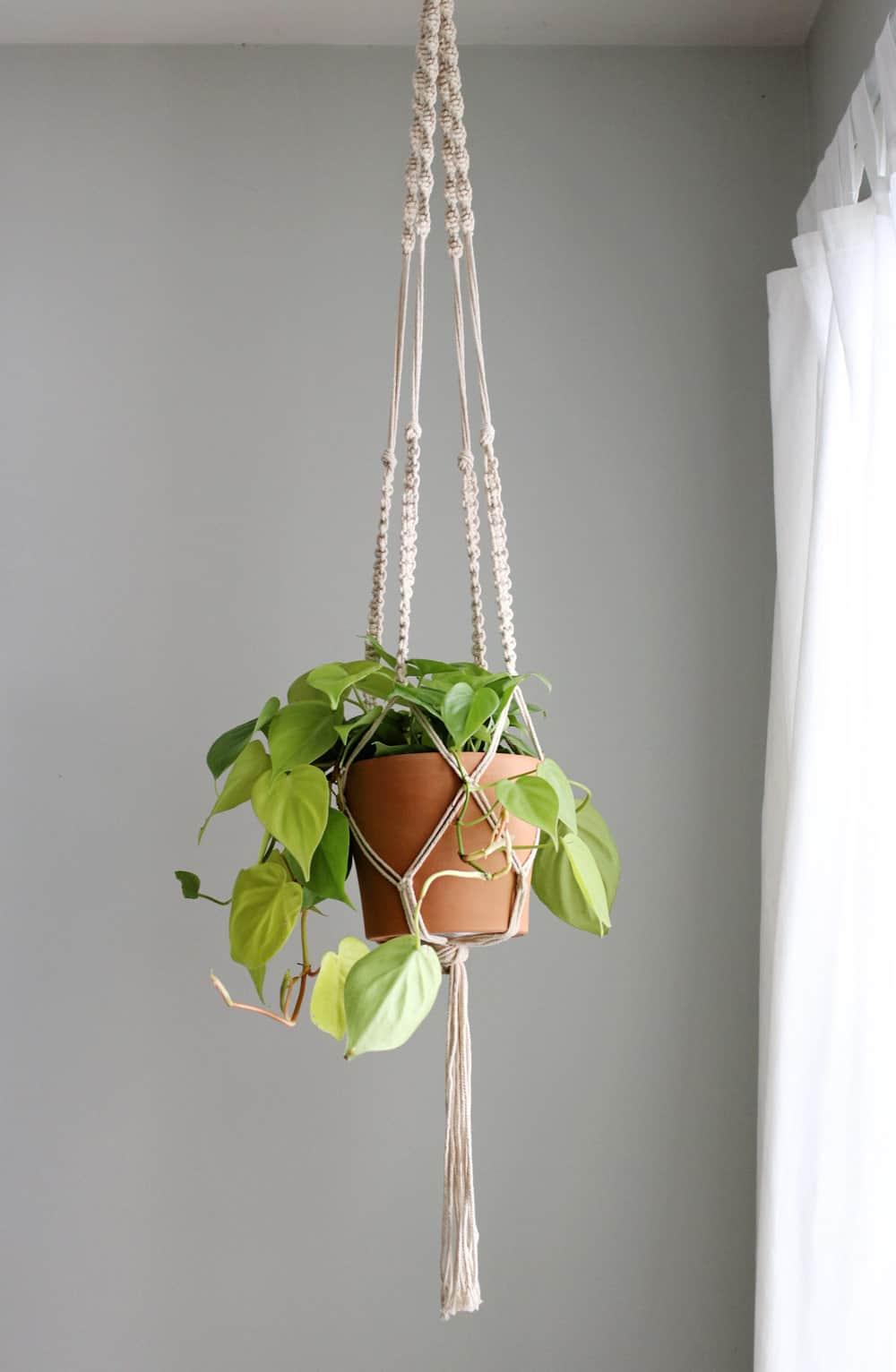 Macrame Plant Hanger - HelloGlow.co