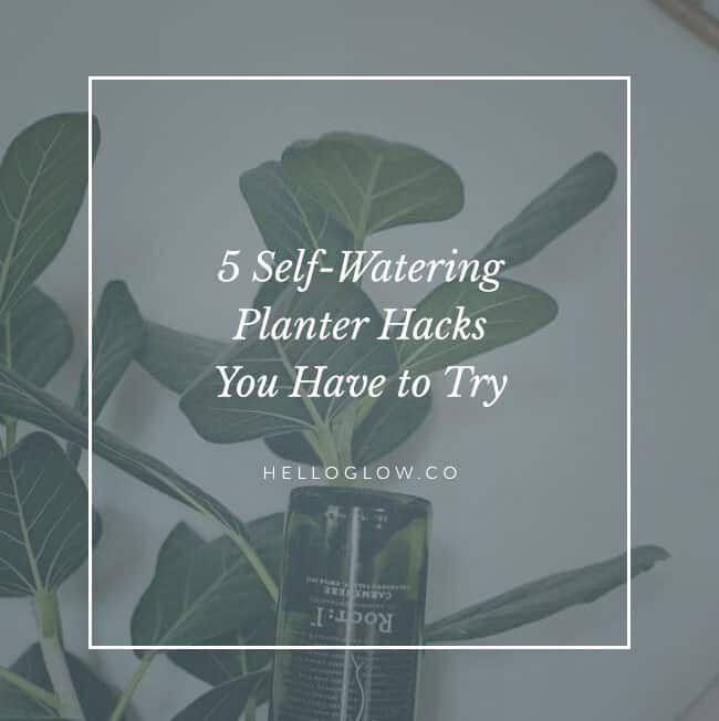 5 Self-Watering Planter Hacks You Have to Try